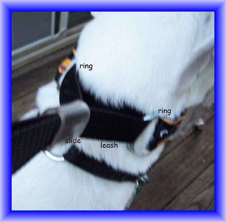 Jansmartingales, Martingale Collar/Leash Combination, Small Dog Size, iblu096