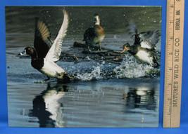 Mark Lewer Ducks Taking Flight Photo Picture Printed on Metal Wall Hangi... - $18.80