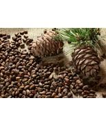 Pine Nuts Bird Pet Food Treats Parrot African Grey Cockatoo Drs. Foster ... - $9.58