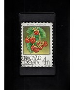 Framed Stamp Art - Postage Stamp from Hungary - Raspberries - $8.99