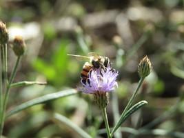 Bee on flower,Photography,Digital download,Garden decor,Background,Art,P... - $5.00