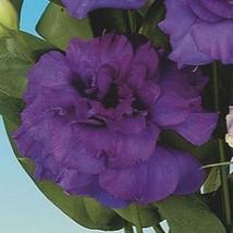 20 Purple Bellflower Seeds (ABC Series)  - $2.99
