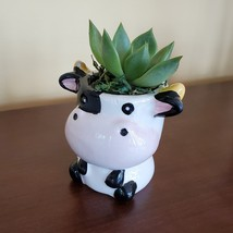 Cow Planter with Succulent, Live Plant Gift, Echeveria Agavoides, Farm Animal image 2