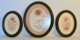 Set 3 Oval Wood Black Frame with Glass Dry Flow... - $8.94