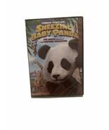 SNEEZING BABY PANDA THE MOVIE DVD YOUTUBE Amber Clayton - $8.99