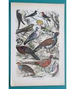AMERICAN BIRDS Hoopoe Pheasant Hummingbird Partridge - 1875 Hand Colored... - $7.19