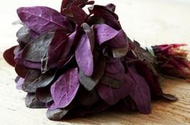 Orach Triple Purple Non GMO Heirloom Garden Vegetable Seeds Sow No GMO® USA - $1.97+