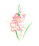 """Pink Gladiolus,"" an A. Rose Designs (tm) note card - $5.95+"