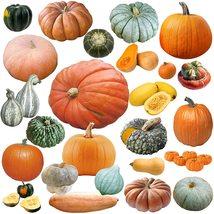 15 Seeds Pumpkin Mix - $19.96