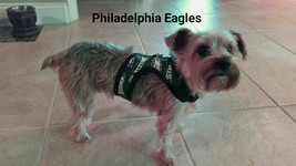 Philadelphia Eagles dog harness. Fun,  bright easy harness, choke free w... - $24.00+
