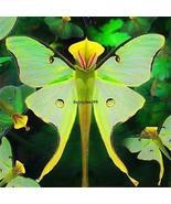 100 Seeds Phalaenopsis Orchid Seeds Bonsai Rare Orchid Flower Seeds Indoor - $2.99
