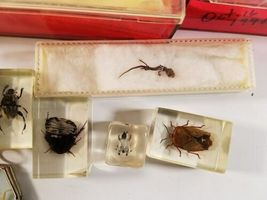 Insect Entomology Beetle Collection 14+ Specimen Lizard Dried Real Taxidermy image 5