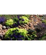 Virtual Freebie Viewing Photos 2018 Backyard Garden Delights Escape Project - $0.00