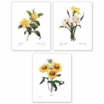 Botanical Art, 8x10 Yellow Flower Prints, Redoute French Home Wall Decor, Set of