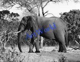 Digital download,Elephant,Photography,Christmas decor,Home decor wall,Pr... - $4.50