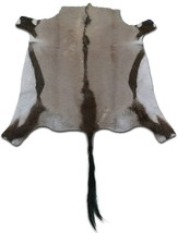 Natural Large Gemsbok Skin Rug Size: 4' X 4' ft African Antelope Gemsbok 28 - $236.61