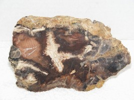 POLISHED PETRIFIED WOOD PIECE MAYBE SYCAMORE WOOD? EUC - $29.99