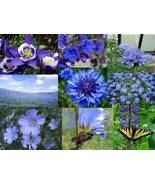 SHIP FROM US 400,000 ALL Blue Wildflower Mix Seeds, ZG09 - $161.16