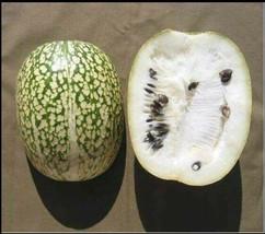 10 Seeds Shark Fin Melon Chilacayote Fig Leaved Malabar Gourd Heirloom Very Rare - $3.99