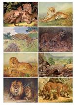 Printable Vintage Wild Cats Lion Tiger Digital Collage Sheet  Clip Art  ... - $2.50