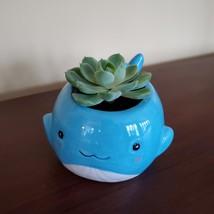 "Happy Whale Planter with Live Succulent, 6"" Blue Ceramic Animal Pot, Echeveria"