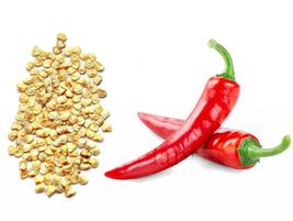100 Giant Spices Spicy Red Chili Hot Pepper (9), HZ Healthy Vegetable Seeds - $8.89