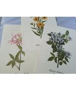 Wildflowers Of America Vintage Aufdrücke Gemälde Vollfarbig Smithsonian - $47.36