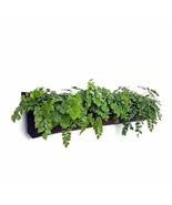 5 Pocket Indoor Waterproof Horizontal Planter - $36.29 CAD