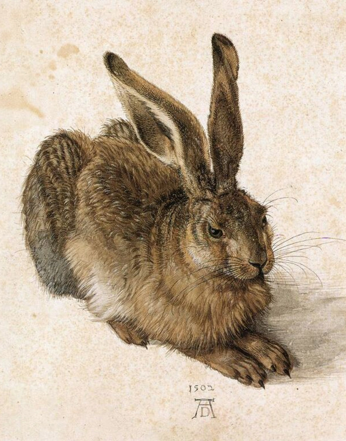 Albrecht Durer-Young Hare,  1500s, rabbits, bunny, animal art print, wildlife ar - $17.49