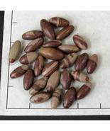 "Shiva Lingam Tan 22-27 pk Small Bulk Stones 1/4 lb Narmada River 7/8-1"" - $58.80"