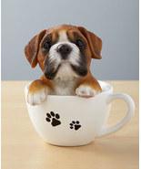 Teacup Pups - Boxer - $14.95