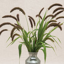 Lowlander Ornamental Grass Seed / Lowlander Grass  Flower Seeds - $17.00