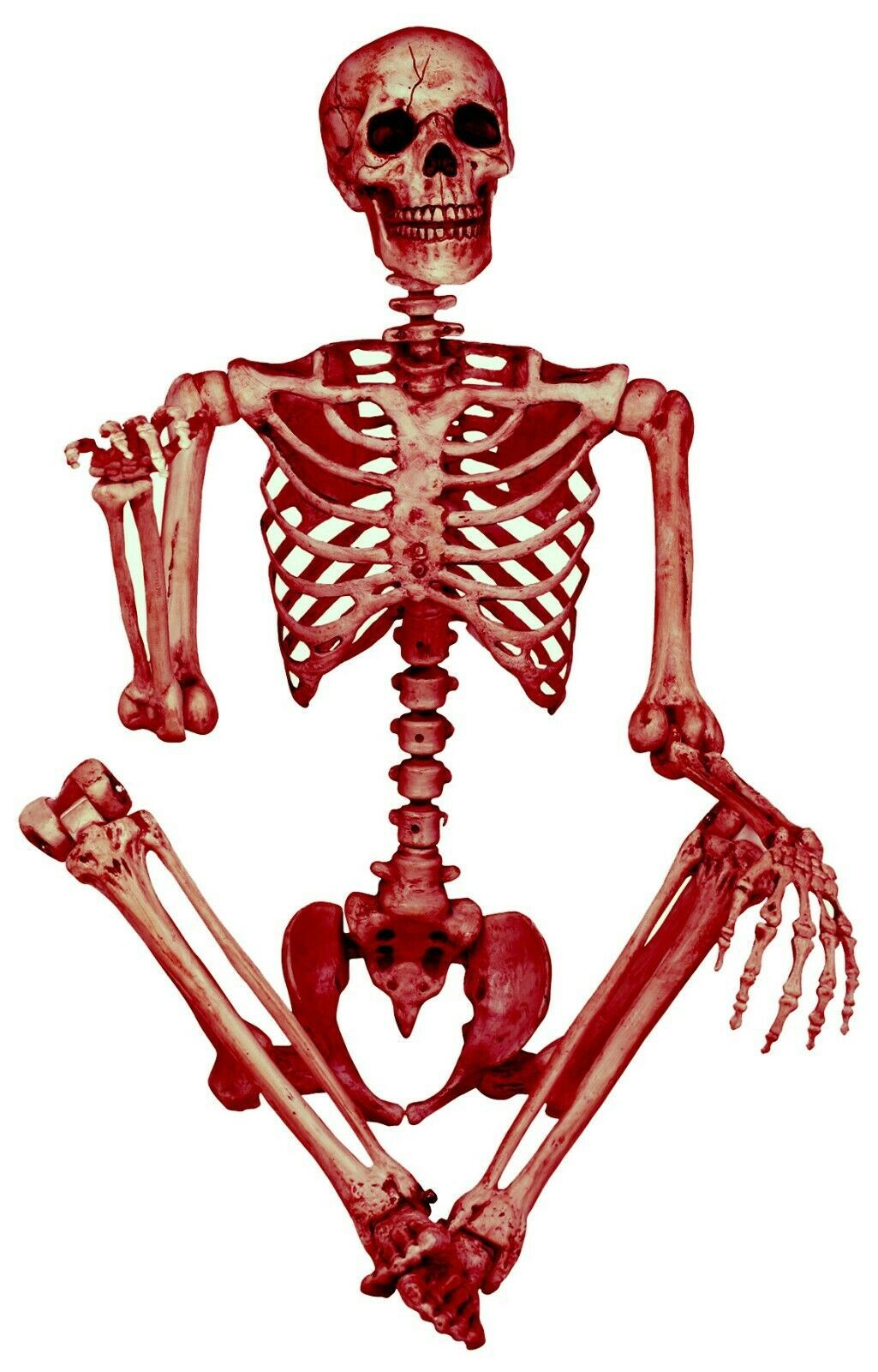 5-Ft Life Size DECAYED POSE-N-STAY SKELETON Halloween Haunted House Horror Prop - $55.83