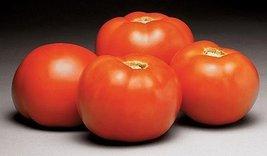 2000 Seeds of Better Bush Vfn Hybrid - Tomatoes Early Season - $155.43