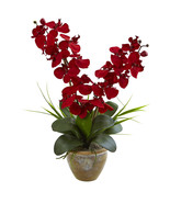 Seasonal Double Phalaenopsis Orchid Arrangement - $60.44