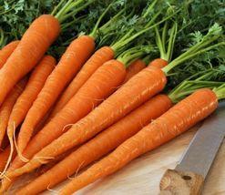 "SHIP From US, 1000 Seeds Carrots ""Tendersweet"", Vegetable Seed AM - $45.99"