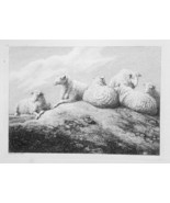 1801 ORIGINAL ETCHING Print by Howitt - Sheep Family Resting on Hill - $30.60