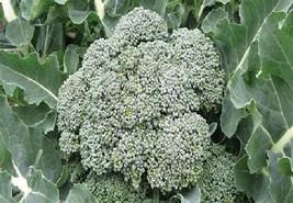 Broccoli Waltham 29 Non GMO Heirloom Garden Vegetable Seeds Sow No GMO® USA - $1.97+