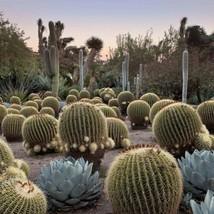 20 Seeds Barrel Cactus Mix Seed Echinocactus Species Mix Seeds - $17.94