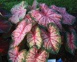 51eilutcy5l. sl1500  thumb155 crop