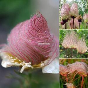 Neue nette entzückende Blumen wohlriechende Blüte gestreifte ElR8