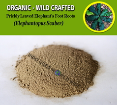POWDER Prickly Leaved Elephant's Foot Roots Elephantopus Scaber Organic ... - $7.85+