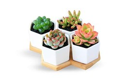 Succulent Flower Pots for Indoor Outdoor   4 Pack 2.75 Inches Each   Mod... - $15.02