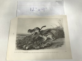 American Hare Snowshoe Rabbit 60 Book Plate Picture Art John James Audub... - $19.80