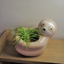 "Live Air Plant in Sloth Animal Planter, 5"" beige glazed ceramic pot image 2"