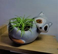 "Live Air Plant in Raccoon Animal Planter, 5"" grey glazed ceramic pot image 2"