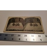 Home Treasure Cocoa Pods and Beans Samoa Stereoview Card Damaged Bends C... - $23.74
