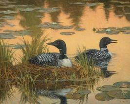 White Mountain Puzzles Nesting Loons - 1000 Piece Jigsaw Puzzle - $24.99