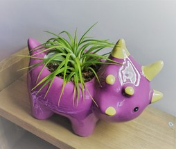 "Live Air Plant in Dinosaur Animal Planter, 5"" purple glazed ceramic pot, Tyson image 2"
