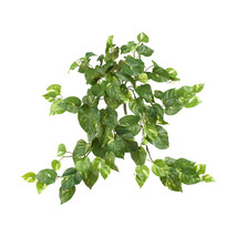 "30"" Pothos Hanging Bush (Set of 3) - $49.77"